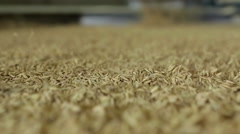 Slow motion of rice seeds were selected on the treadmill in closeup Stock Footage
