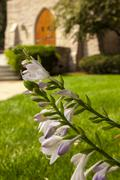 White Flowers with out of focus church doors in background Stock Photos