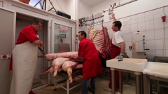 Butchers manoeuvring pork carcasses Stock Footage
