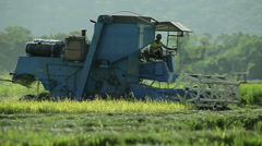 Man driving machine in the field of rice seed planting cutting in sunny day Stock Footage