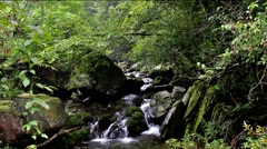 The creek in the primitive forest Stock Footage