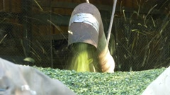 Hops Harvest Dust blown out from machine pipe DIFFERENT SHUTTER SPEED Stock Footage