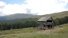 Wooden house in the mountains and a horse pasture near him Stock Footage