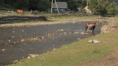 Bathing the horse in the river Stock Footage