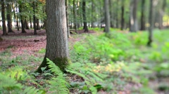 woodland scene (tilt/shift) - stock footage