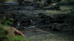WATER SPILLING OVER RIVER ROCKS Stock Footage