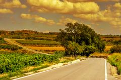 landscape with vineyards and a secondary road in a mediterranean country at s - stock photo
