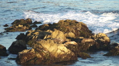Sleeping Seals at Cypress Point, Monterey @ 240 fps Stock Footage