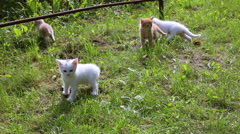 Adorable tabby kittens outdoors Stock Footage