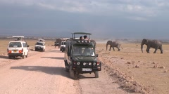 Large herd goes by car with tourists. Stock Footage