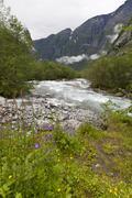 Roaring river, wildflowers and mountains, lodal valley near kjenndalen glacie Stock Photos