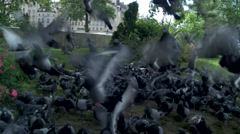 Doves in park, flying away Stock Footage