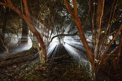 eerie woods and the english countryside at night, light streaming through tre - stock photo