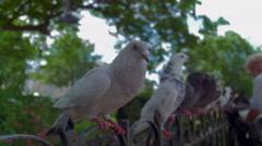 Feeding doves, paris Stock Footage