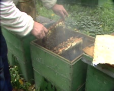Beekeeper checking frames in beehive using a smoker to keep the bees relaxed Stock Footage