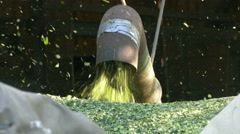 4K Hops Harvest Dust blown out from machine pipe DIFFERENT SHUTTER SPEED Stock Footage