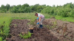 Young woman harvesting potato on the field Stock Footage
