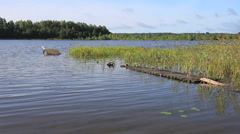 Summer landscape with lake and wooden bridge Stock Footage