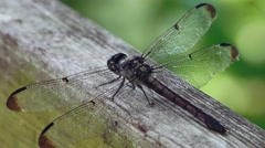 Landing Dragonfly on wooden railing - stock footage