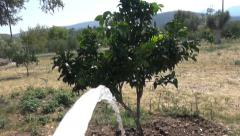 Watering the Trees Stock Footage