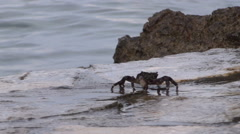 crab on krk 02 - stock footage