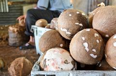 Coconut processing agricultural produce.. Stock Photos