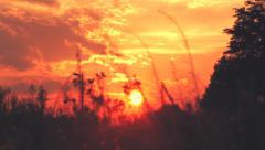 Sunset 85mm tilt shot 1080p 24fps Stock Footage