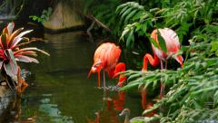 4K Lush Forest, Stream, Flamingos and a Butterfly Stock Footage