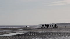 Dog walkers on Winterton beach Stock Footage