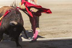 bullfighter bullfighting with the crutch in the bullring of baeza, jaen provi - stock photo