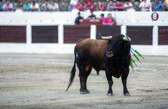 Capture of the figure of a brave bull in a bullfight, spain Stock Photos