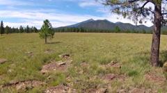 Meadow Trees Mountains- Buffalo Park- Flagstaff Arizona Stock Footage
