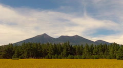 Humphreys Peak And Coconino Forest Across Flowering Field Stock Footage