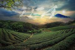 beautiful tea garden sunset - stock illustration