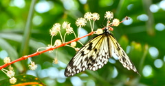 4K Close Up Macro Yellow and Black Butterfly Stock Footage
