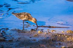 waterbird - stock photo
