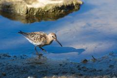 water bird - stock photo