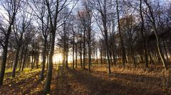 Late afternoon winter sunlight shining through trees in woodland at longhough Stock Photos