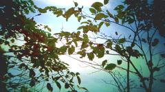LEAVES-SKY BACKDROP - stock footage