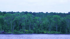 Moving Past An Island Forest - stock footage