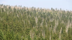 Dead trees. Co2 and So2 emission. Acid rains. Air pollution Stock Footage