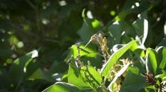 Dragonfly taking flight Stock Footage