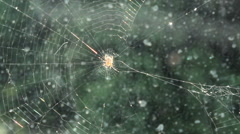 Stock Video Footage of Spider perched in the middle of cobweb in the window.