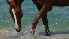 horse in the beach - stock footage