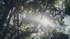 Tree in the forest with sunlight. Nature. - stock footage