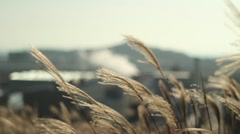 Environmental Waste Next to Natural Wheat Field Stock Footage