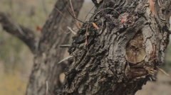 Spooky Spiky Trees_Ungraded - stock footage
