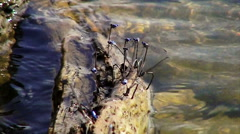 Slow Motion of a Dragonfly Party Stock Footage