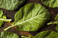 Raw organic green collard greens Stock Photos