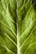 raw organic green collard greens - stock photo